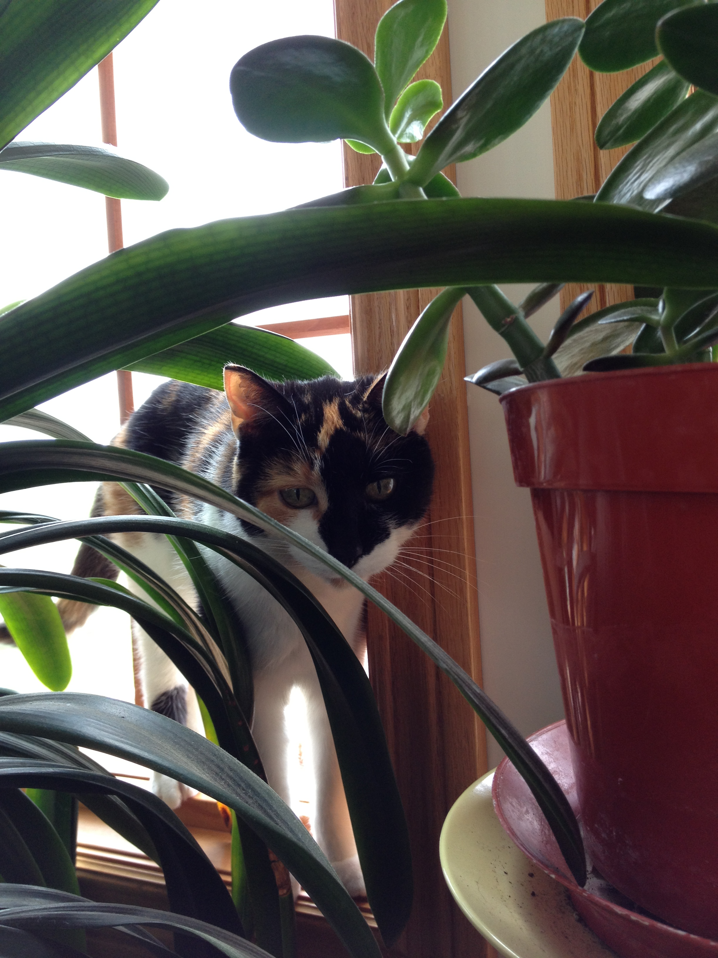 Indoor Plant For Cats To Eat