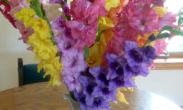 Glads from the Farmers' Market – Beautiful Colors!