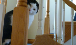Cats Get In the Act – George Helps Me Photograph