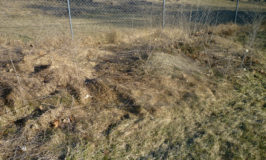 Cleaning Up an Old Yard Mess – Perennial Grass to the Rescue!